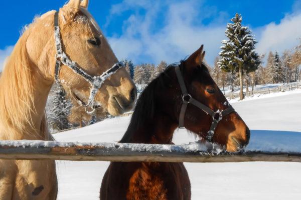 pferdeurlaub vöran
